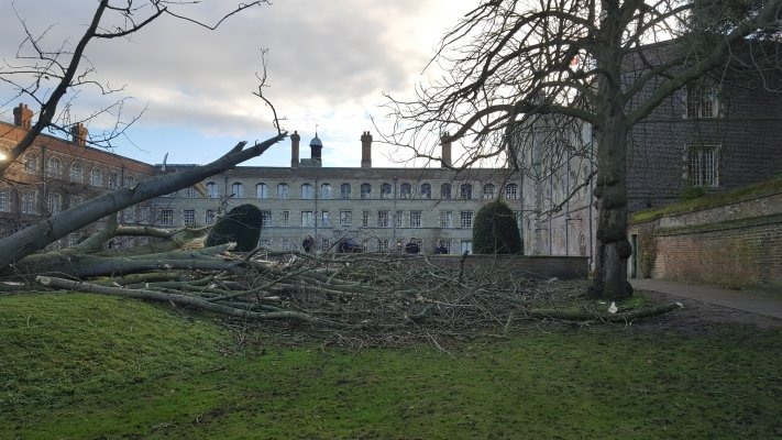 Uprooted tree lying across grass with College First Court buildings in the background