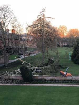 Uprooted tree lying across grass with West Court buildings in the background