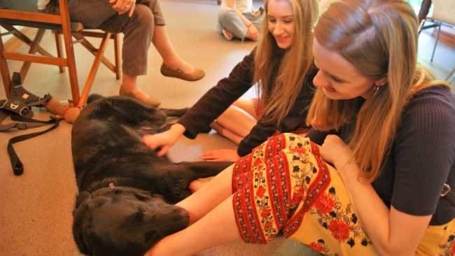 Image ofDogs help students to destress