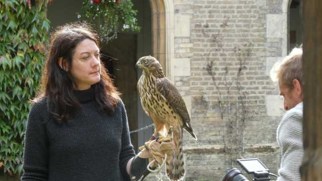 Image ofH is for Hawk at Jesus College