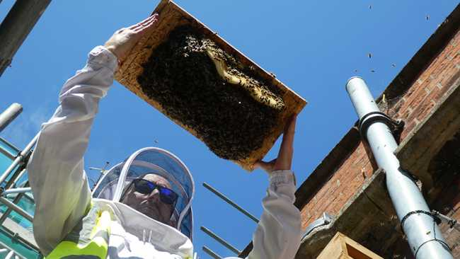 Image ofHow do you move a bee colony?