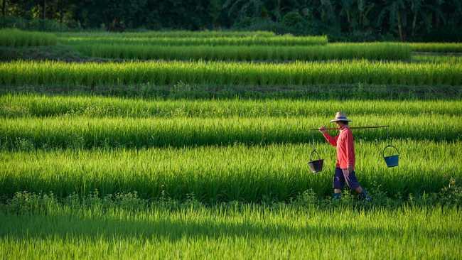 Image ofThe other half billion: rural development in China