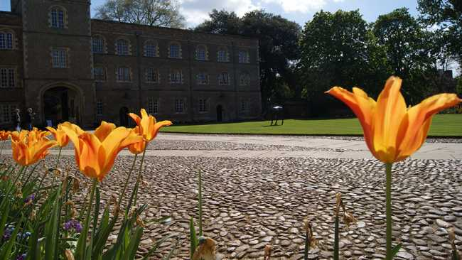 Image of Tulips in First Court